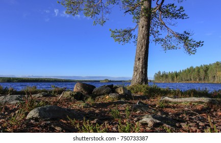 Forest and lake in the taiga area. Cape, pine trunk and an old campfire this side. Calm lake in autumn.