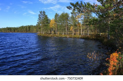 Forest and lake in the taiga area. Reed, creepers and trunks on the right side. Calm lake in autumn.