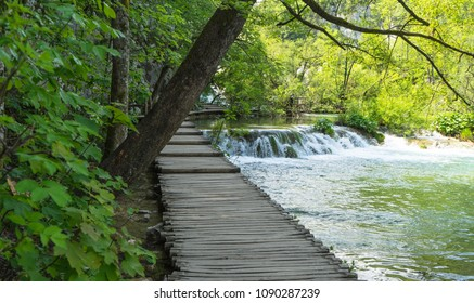 Forest with the lakes and waterfalls at Plitvice Lakes National Park in Croatia