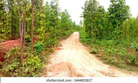 forest land road cen wellpaper