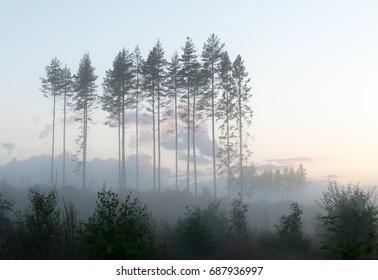 Forest landscape after the sunset