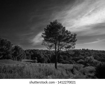Forest landscape in the afternoon