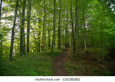 Forest Landscape in Bavaria Germany (German: Wald in Bayern)