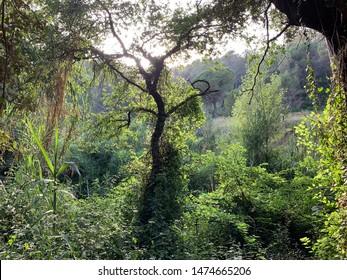 Forest landscape at Collserola natural park in Barcelona Catalonia Spain