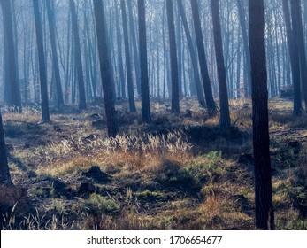 Forest landscape during daytime - Poland