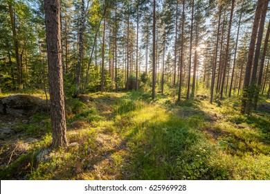 Forest landscape in Finland at summer day