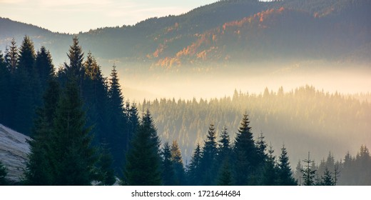 forest landscape in fog. mountain behind the glowing mist in valley. pine trees silhouettes on the hills in front of a sunny autumn scenery