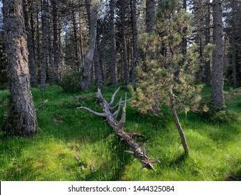Forest landscape at French Pyrenees