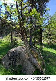 Forest landscape at the french Pyrenees Europa