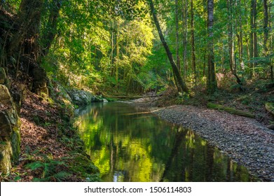 Forest landscape with green trees and river, creek. Rosewood creek in Dorrigo national park with coastal rainforest, Australia