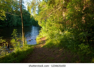 Forest landscape and lake