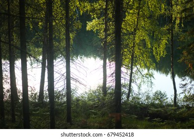 forest landscape with lake