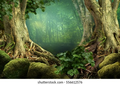 Forest landscape with massive trees and roots