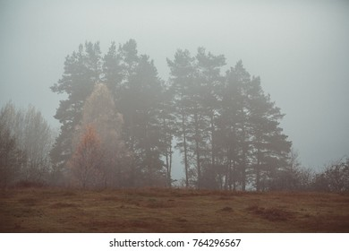 Forest landscape in a misty morning
