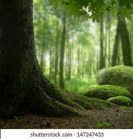 Forest landscape with mossy stones and old tree
