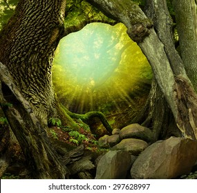 Forest landscape with old hollowed trees, sunbeams, shining light, rocks