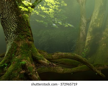 Forest landscape with old mossy tree, foliage and roots