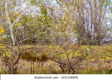 Forest landscape with poplar trees at Zlato Pole or Gold Field Protected Area, Municipality of Dimitrovgrad,Haskovo Province, Bulgaria, selective focus - Shutterstock ID 1631140696