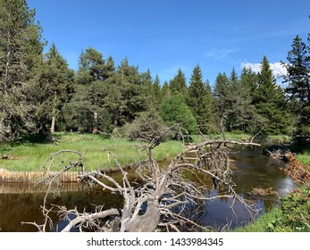 Forest landscape with a river in the Pyrenees in France Europa