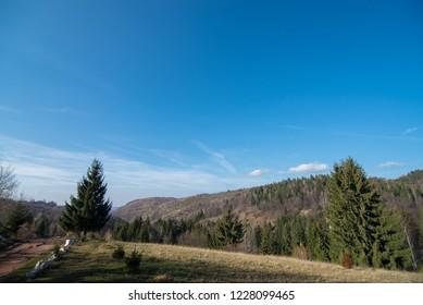 forest landscape shoot