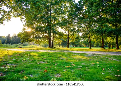 Forest landscape in summer. Beautiful photo at sunset. Forest nature in the sunset of the summer.