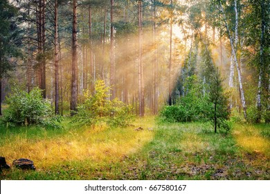forest landscape, the sun's rays breaking through the trees