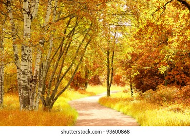 Forest Landscape Trees of Yellow