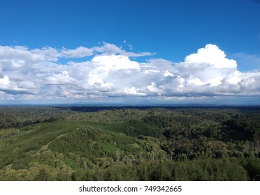 Forest Landscape view