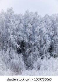 forest landscape in winter frosty day covered with hoarfrost trees