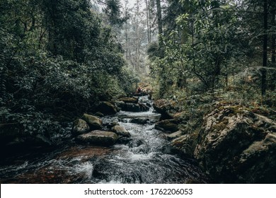 Forest landscape, you can see trees, a stream, rocks and a hica with your dog on a wooden bridge in the middle of the forest, they play while having a good time.