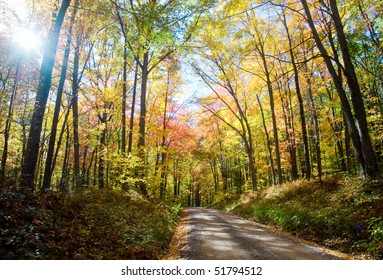 forest lane and fall trees