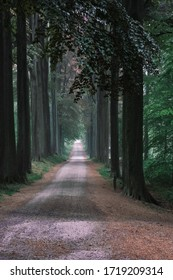 A forest lane on a drizzly day