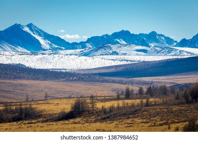 forest of larch on the background of mountains with snowy peaks