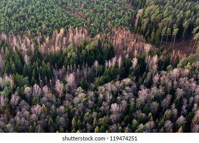 Forest at late autumn, aerial view, Lithuania