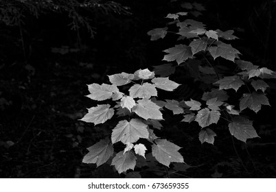Forest leaves in Michigan Upper Peninsula