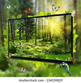 Forest Life shows on the TV screen
