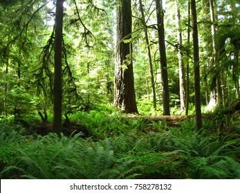 Forest Like a Jungle!