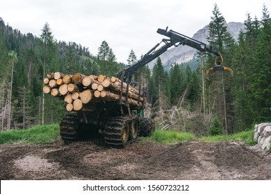 Forest log truck tree harvester working woodcutter, industry cut wood. the consequences of the weather, a windbreak in the mountains, damage to nature and the national park, Alpine Austria, Italy.