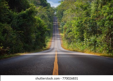 Forest long road at Khaoyai National Park (The World Heritage of nature) Thailand
