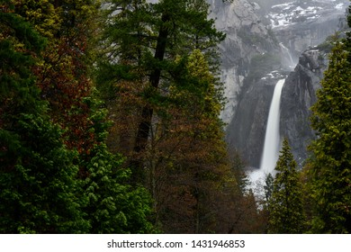 Forest With Lower Yosemite Falls To Right in eraly spring