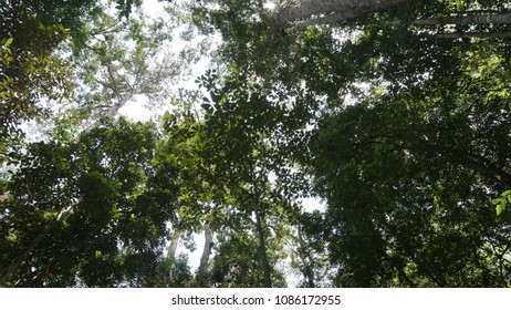 Forest at Malaysia