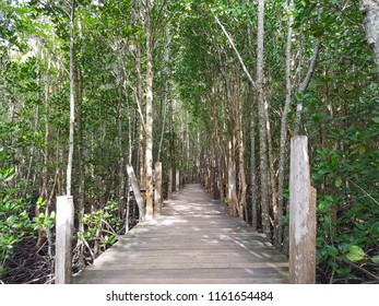 Forest of Mangroves in Tung Prong Thong or Golden Mangrove Field at Estuary Pra Sae, Rayong, Thailand. Mangrove forest with many mangrove trees. Selective focus.