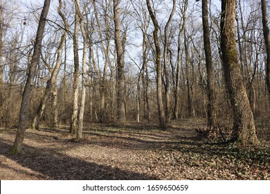 forest with many trees in early spring