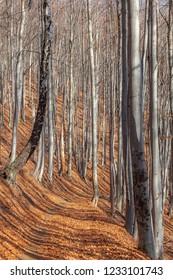 Forest, Maramures Romania