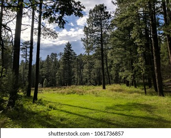 Forest meadow in Arizona