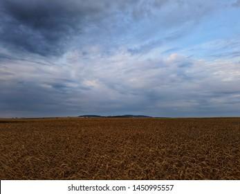 A forest in the middle of a grain field. Eastern Europe landscape - Shutterstock ID 1450995557