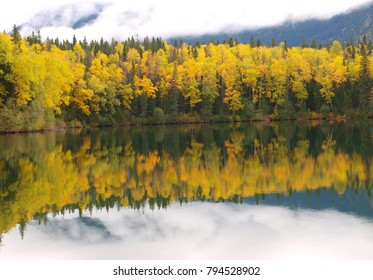 Forest mirrored in lake