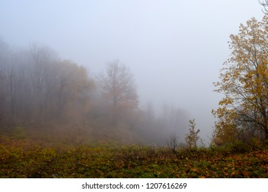 Forest mist in autumn fog season. Autumn fog in misty forest. Autumn mist forest scene. Autumn fog forest mist view