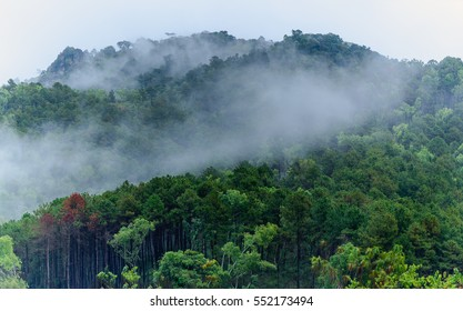 The Forest and mist landscape view .