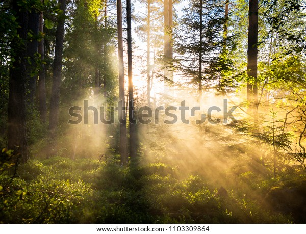 Forest in mist with lightrays
